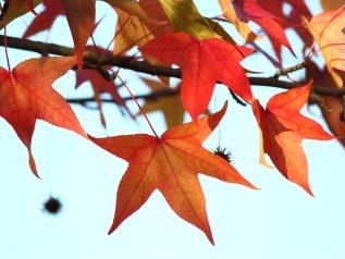 Fall Leaves and Home Maintenance