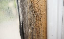 Does my home insurance cover mold?