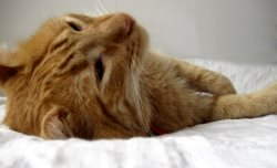 Remove Cat Stains and Odors