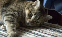 Remove Pet Odors from carpet