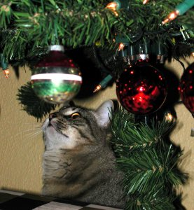 Pet Holiday Safety Ornaments